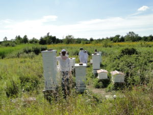MANAGEMENT & BEEKEEPING SUPPLIES