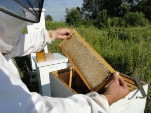 Honey Extracting Services in Chicago Illinois