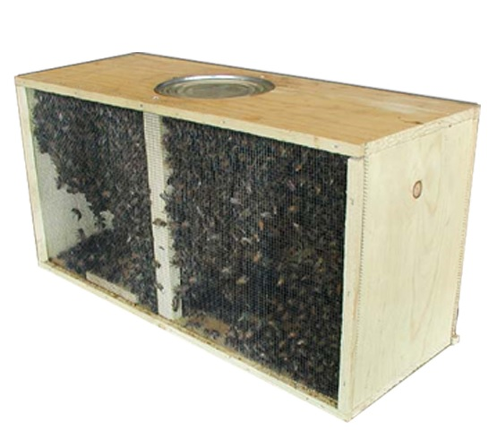 Russian Package Bees - Meyer Bees - photo#45